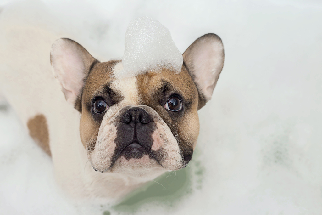 3-Plumbing-Tips-for-Dog-Owners-from-Your-Trusted-Minneapolis,-MN-Plumbing-Service-Provider